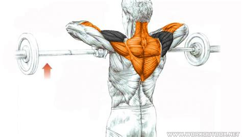 Barbell Upright Row | Fitness Workouts & Exercises