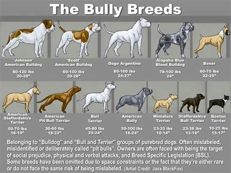 Bully breed chart | Bully breeds dogs, Pitbull terrier