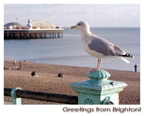 Culture: Wildlife - The Urban Seagull Colony: loved and