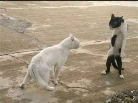 KUNG-FU CAT: Angry feline fighter shows off moves - YouTube